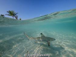 Baby shark doo doo doo by Joerg Blessing