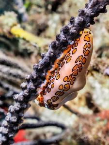 shell by Marc Van Den Broeck