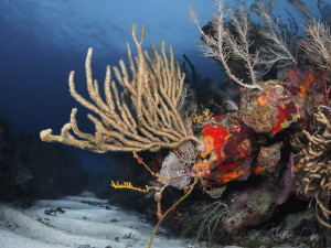 coral way by Marc Van Den Broeck
