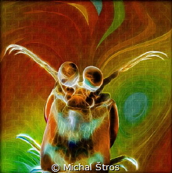 Mantis shrimp (taken at Lembeh, new background added wit... by Michal Štros