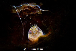 Blenny's umbrella by Julian Hsu