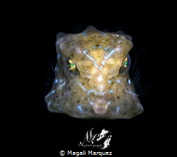 Juvenile yellow boxfish  With Retra snoot  F16.0 1/250 ... by Magali Marquez