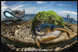 Memories of Cayman islands by Michal Štros