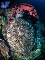 turtlelid by Marc Van Den Broeck