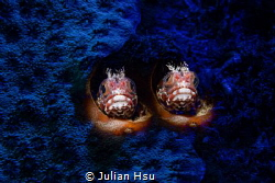 Twins by Julian Hsu