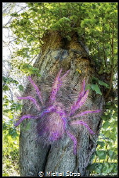 Hairy squat lobster on a tree (a mistaken identity of a g... by Michal Štros