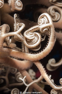macro basket star