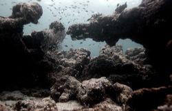 Maldives 2006. Nikkor 12-24mm. by Chris Wildblood