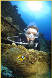 tiny clown fish on the Aida wreck in Red Sea guards it ho... by Fiona Ayerst