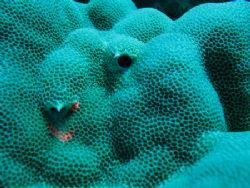 Underwater hive. Rarotonga. 15m deeep. by Hernando Acosta