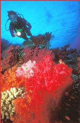 once again the stunning colours of Egypt and the Red Sea ... by Fiona Ayerst