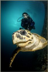 a VERY friendly turtle loves that dome port by Fiona Ayerst