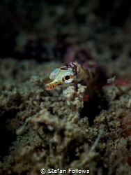 'Where there's muck there's brass'