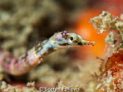 Feeling Cute ... !