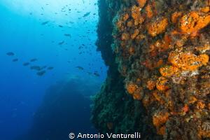 Mediterranean orange madreporas (Canon wide angle 14mm,1... by Antonio Venturelli
