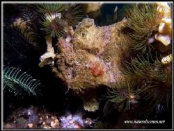 You can't see me!!!C5050 Lembeh by Yves Antoniazzo