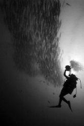 Videographer and Barracudas by Tunc Yavuzdogan