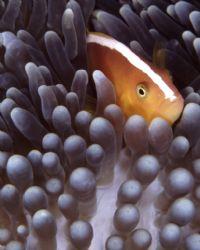 This little guy was taken at Wakatobi, Indonesia by Paul Hunter