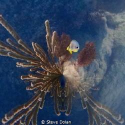 Butterfly taken in Bermuda with Olympus TG-4 by Steve Dolan