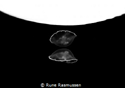 moon jelly reflecting itself in the surface of  the danis... by Rune Rasmussen
