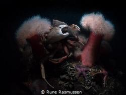 crabs having fun. by Rune Rasmussen