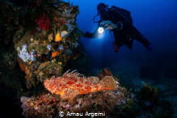 Spotting the red scorpionfish  Diver finds a red scorpi... by Arnau Argemi