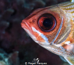 Big eye👀 
