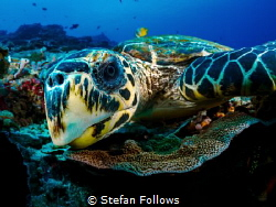 WTF!