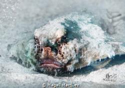 The Grinch Sea Caribbean Batfish   by Magali Marquez