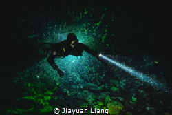 Night diving at Ewens Ponds by Jiayuan Liang