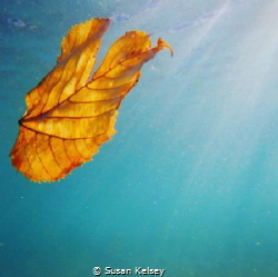 Captured under Lake Michigan, the cycle of life. by Susan Kelsey
