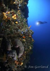 What Diversity - The Adriatic is definitely not dead. EOS... by Jim Garland