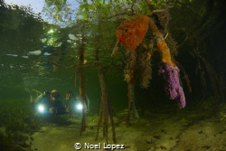 mengrove forest, gardens of the queen, cuba by Noel Lopez