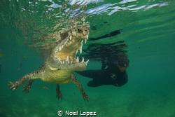 american cocodrilo in a mangrove chanel, nikon D800E, tok... by Noel Lopez