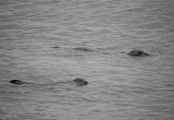 Seals by Pieter Firlefyn