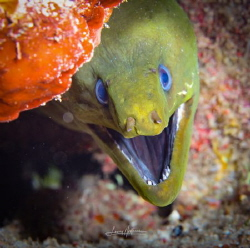 Smiling face looking up from a hidey hole by Lowrey Holthaus