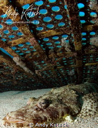 Croc fish in the red sea by Andy Kutsch