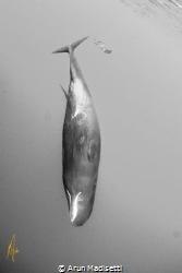 Divers (taken under permit) by Arun Madisetti