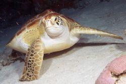 You talkin' to me? Photo taken on night dive in Cozumel w... by Stuart Spechler
