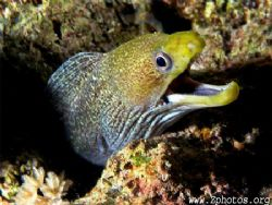 I creeped a little too close to this juvenile undulated eel by Zaid Fadul