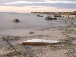 deserted beach western Australian coast Cuttlefish Shell.... by Brad Cox