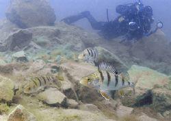Mr Haslam stalking three perch. Capernwray. D200, 16mm. by Mark Thomas