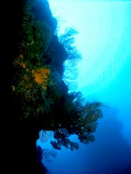 Long way from the surface . This photo was taken after ex... by Steven Anderson