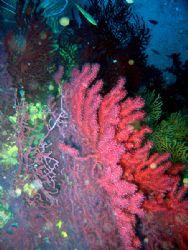Italian Reef at Capo Poro Dive Point (Isola d'Elba) - Ca... by Riccardo Colaiori