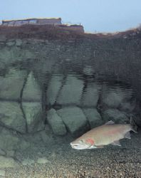 In the shallows at Capernwray Dive Centre. F90 16mm. by Mark Thomas