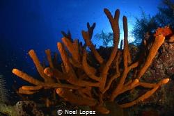 rod sponges, nikon D800E, tokina lens 10-17mm at 15mm, tw... by Noel Lopez