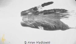 Reflections (taken under permit) by Arun Madisetti