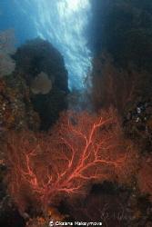 Amazing beauty of the underwater world by Oksana Maksymova