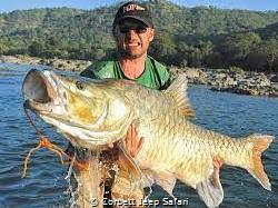 Jim corbett national park have lots of varierties fishesh... by Corbett Jeep Safari
