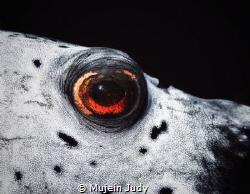 puffer eyes by Mujein Judy